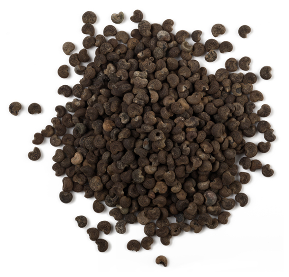 Ambrette Seed Oil image