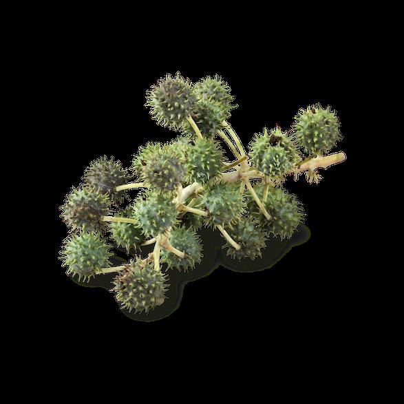 Organic Castor Oil - Image