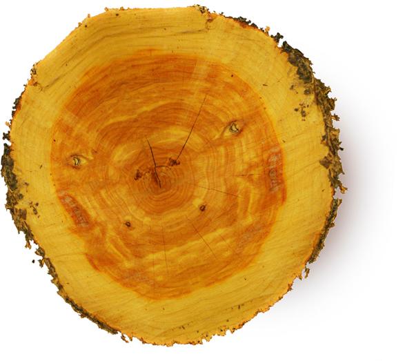 Cedarwood Oil - Image