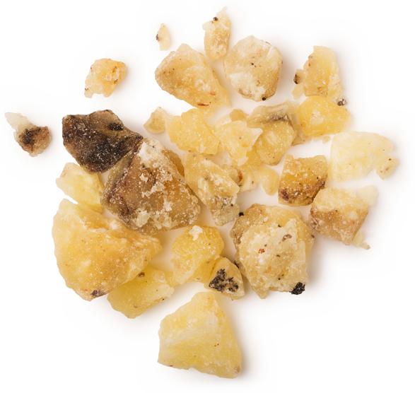 Canarium Commune Gum Oil (elemiová silice) - Obrázek