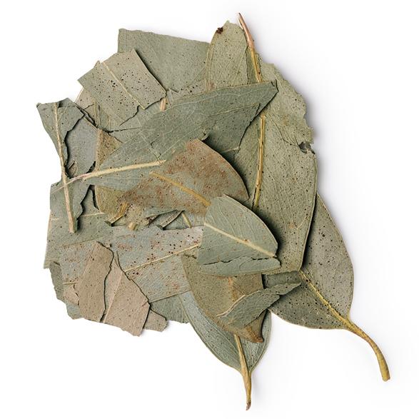 Eucalyptus Infusion - Image
