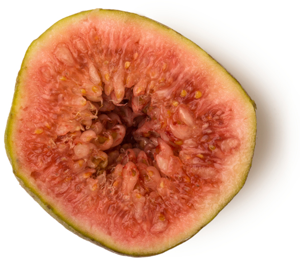 Water (and) Ficus Carica Fruit Extract (Feigensud) - Bild