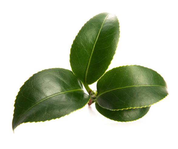 Green Tea Powder - Image