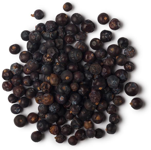 Jeneverbesolie (Juniperus communis) - Afbeelding