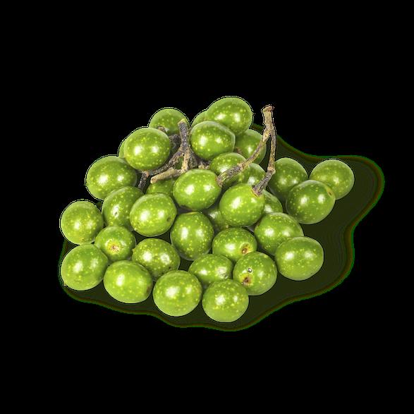 アオモジ果実油 - 画像