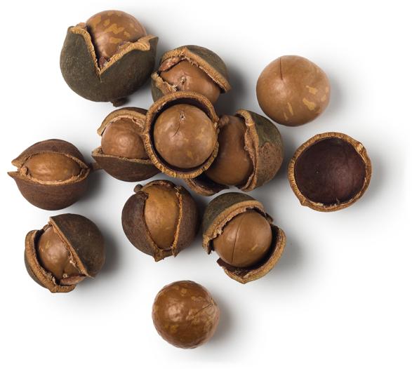 Organic Macadamia Nut Oil - Image