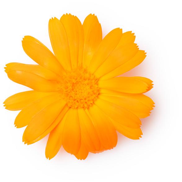 Marigold Petals - Image