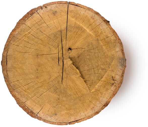 Aniba Rosaeodora Wood Oil (silice z růžového dřeva) - Obrázek