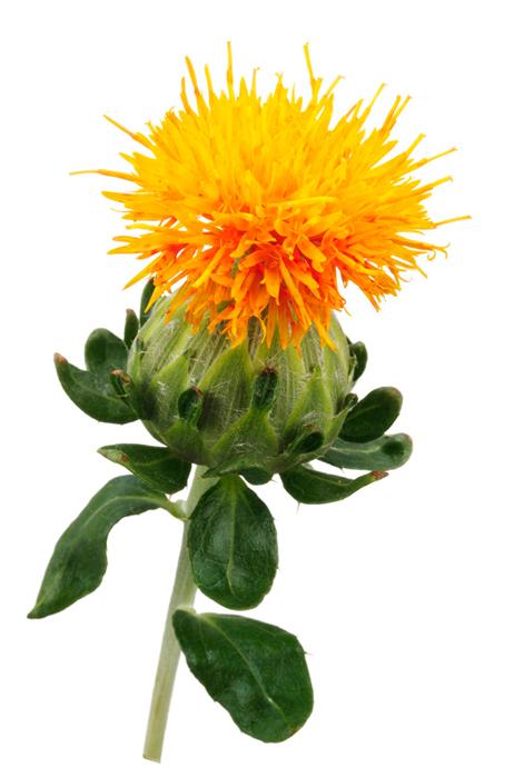 Safflower Oil - Image