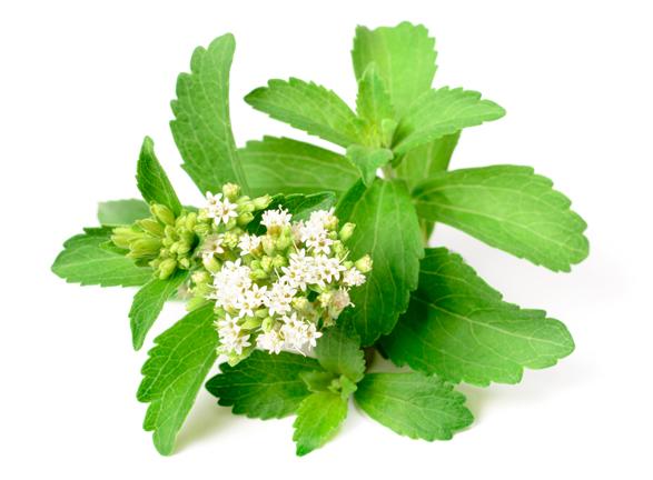 Stevia - Image