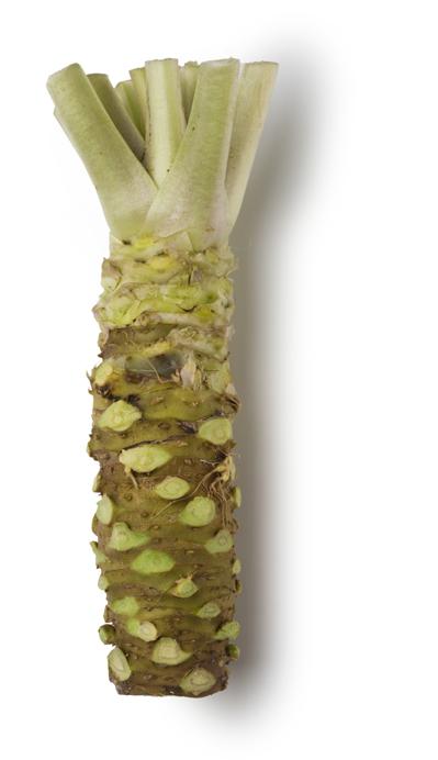 Wasabi and Horseradish Puree - Image