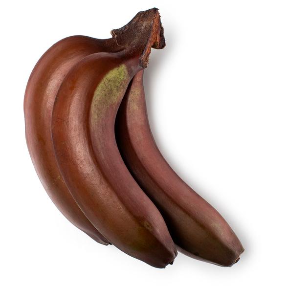 Banana Extract image